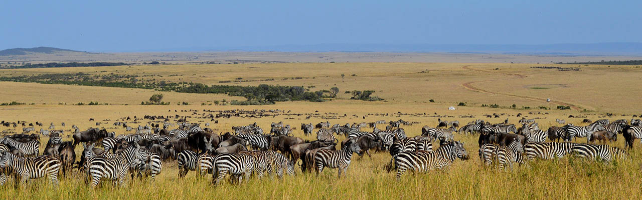 wildlife in Maasai Mara Reserve Kenya