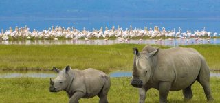 4 Days Lake Nakuru & Masai Mara