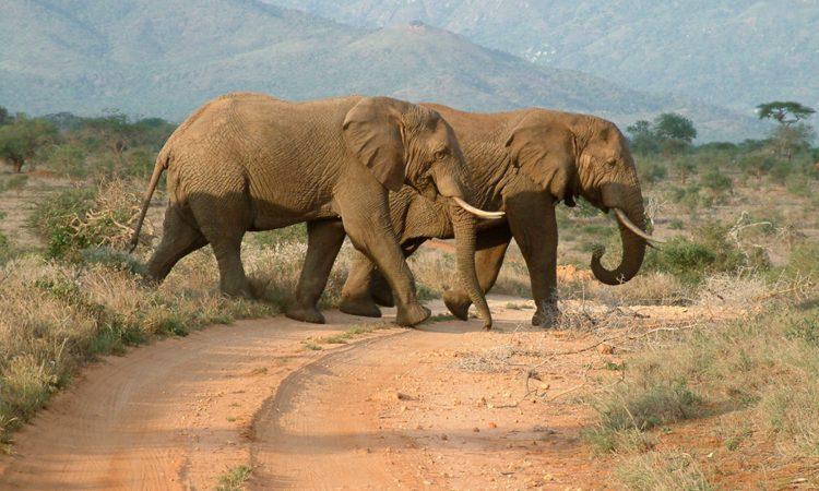 Game Drives in Masai Mara