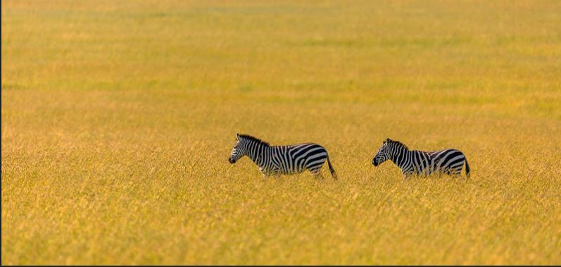 Nature Walks in Masai Mara