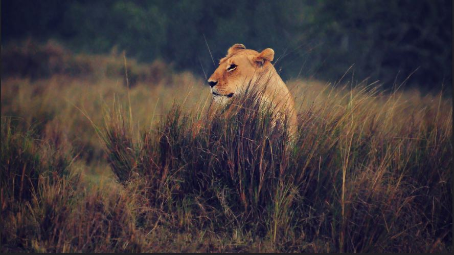 Best time to visit Masai Mara