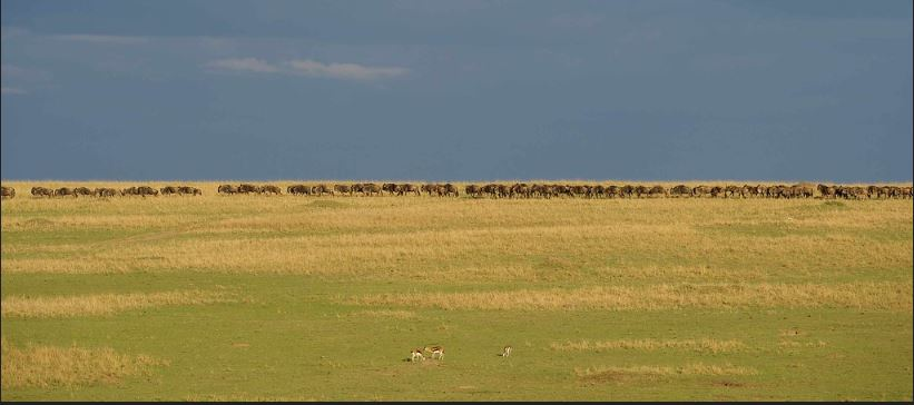 Facts about Maasai Mara