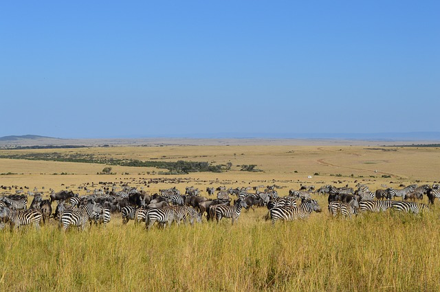The Masai Mara Landscape