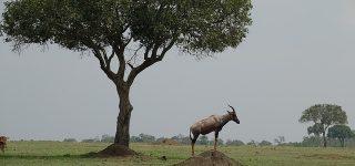 3 Days Masai Mara Group Safari