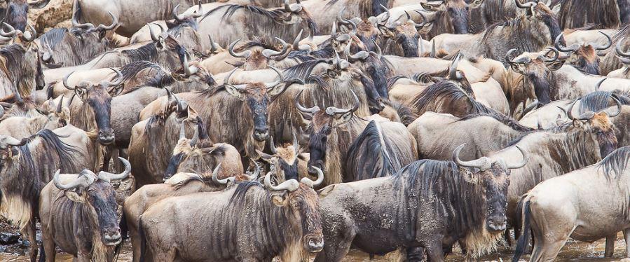 Why visit Maasai Mara