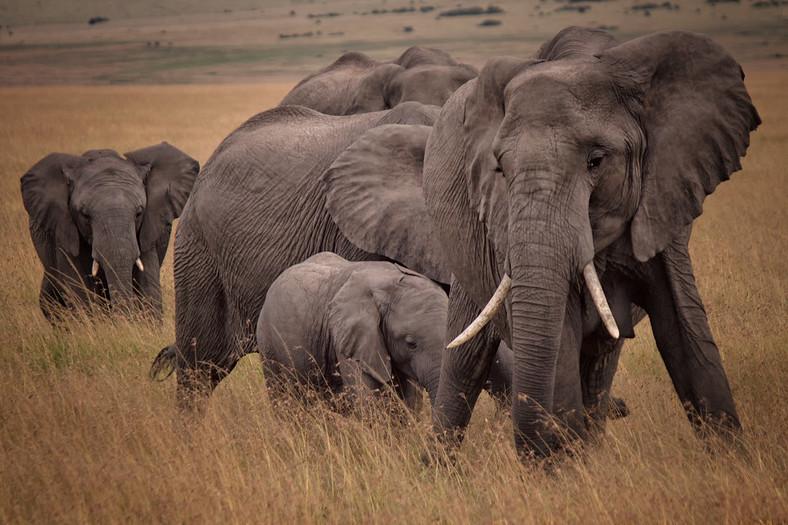 9 days Masai Mara, Lake Nakuru, lake Naivasha & Amboseli