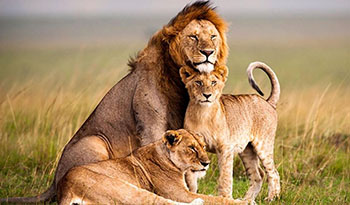 safari information
