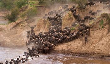 masai mara Information