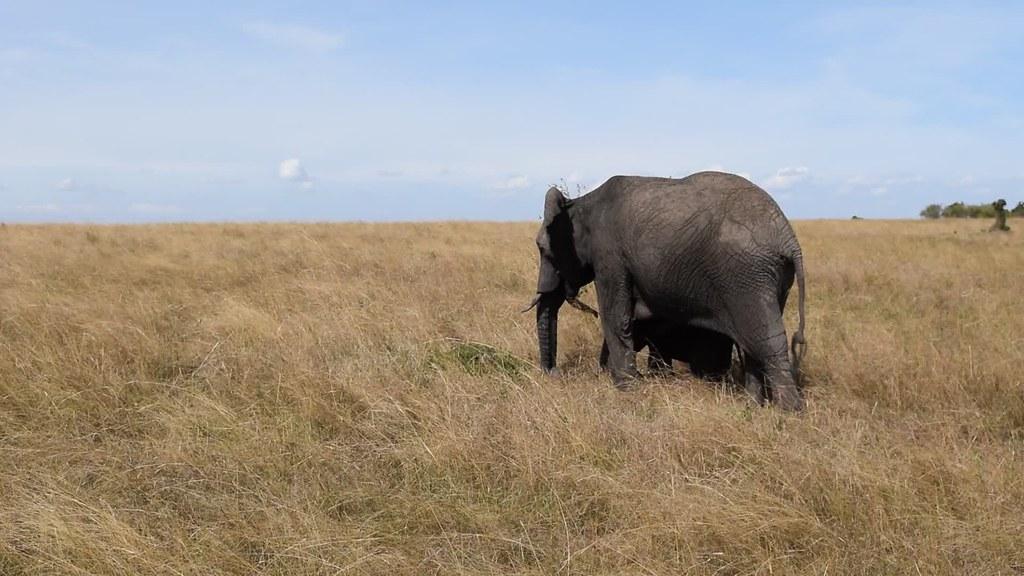 6 Days Maasai Mara Safari