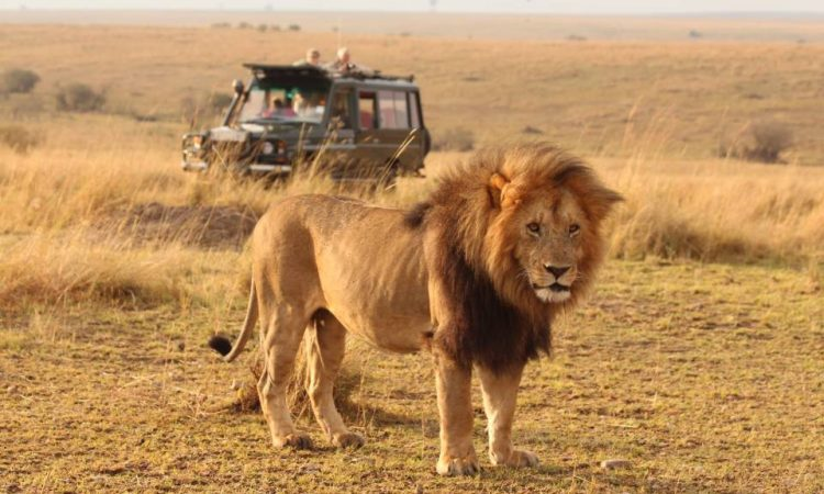5 days Maasai Mara Safari