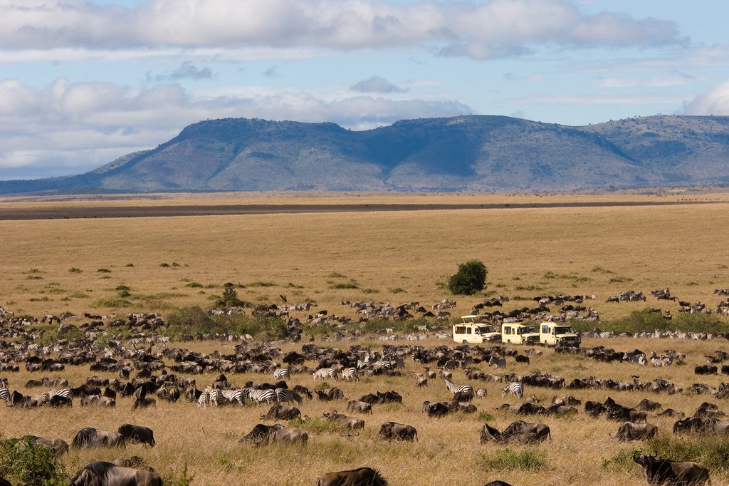 Serengeti National Park vs Maasai Mara National Reserve