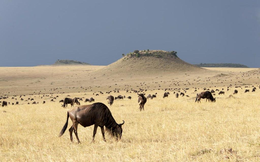 Maasai Mara Jungle