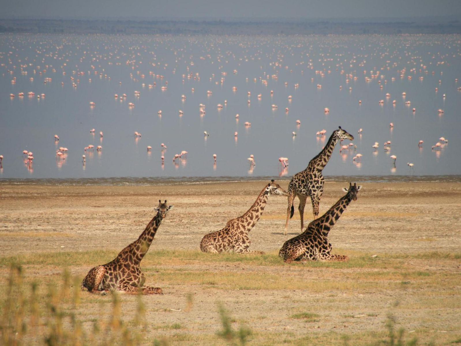 Wildlife in Lake Manyara National Park