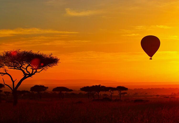 Maasai Mara trees