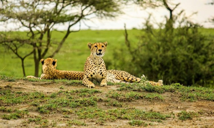 Serengeti National Park vs Maasai Mara National Reserve