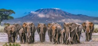 3 Days Amboseli Safari