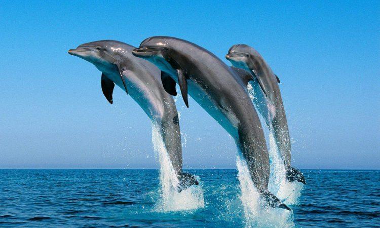 Kisite Mpuguti Marine National Park