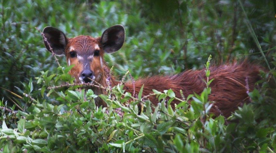 Saiwa Swamp National Parks