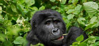 6 Days Kenya & Uganda Safari