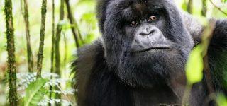 6 Days Uganda Kenya Safari