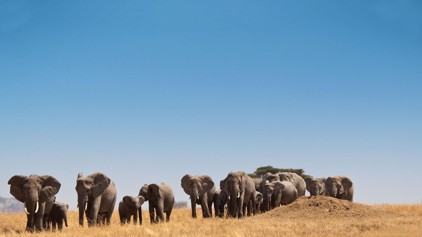 6 Days Kenya Wildlife & Rwanda Gorilla Trekking Safari