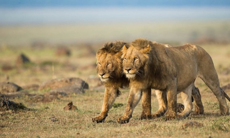 8 Facts about Masai Mara National Reserve