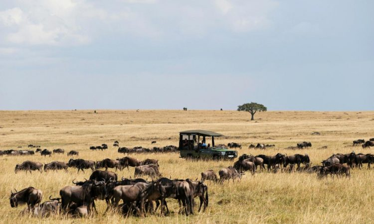 Activities in Masai Mara National Reserve
