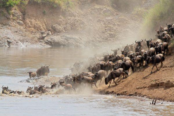 Best time for a visit  to Masai Mara National Reserve