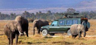 Budget Safaris in Masai Mara