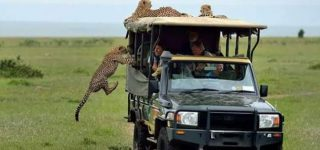 Game Drives in Masai Mara National Reserve