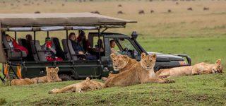 Malaria in Masai Mara national reserve