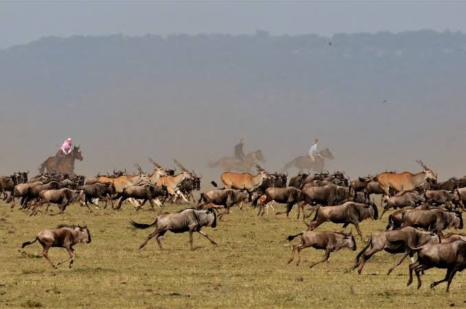 Animals in Masai Mara National Reserve