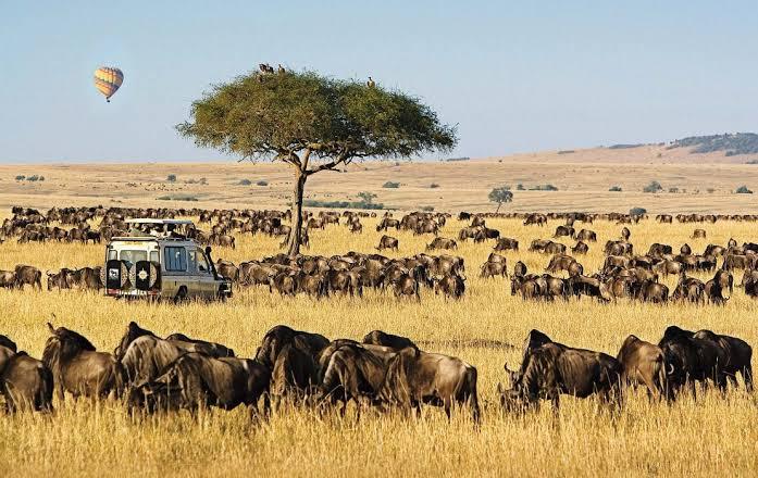 Masai Mara National Reserve Safaris