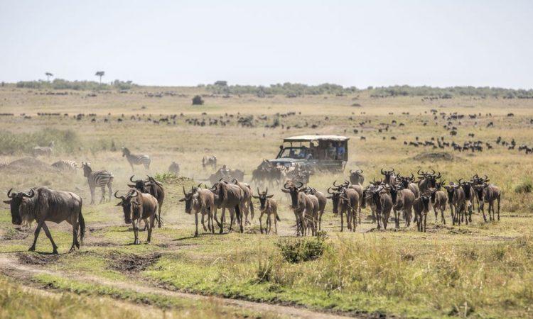 Weather in Masai Mara National Reserve
