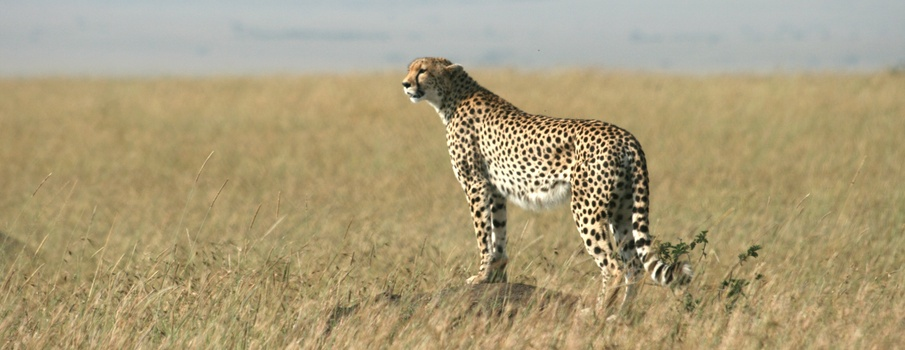 Rules & Regulations in Masai Mara National Reserve