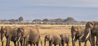 3 Days Tarangire Wildlife Safari