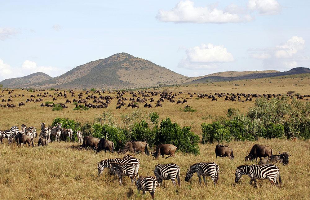 3 Days Tarangire Wildlife Safari