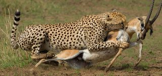 5 Days Masai Mara Wildlife safari