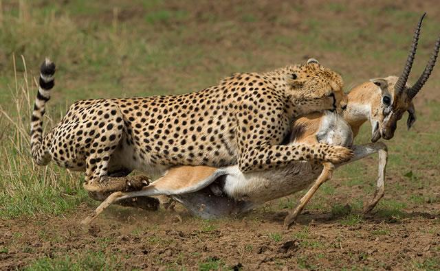 5 Days Masai Mara Wildlife safari