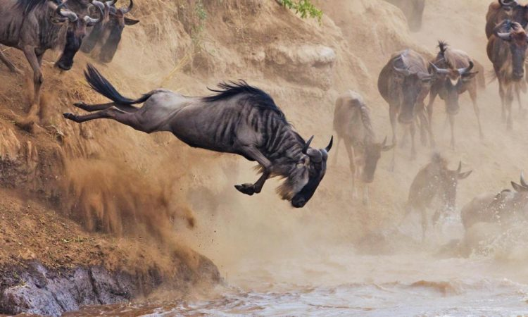 The Great Wildebeest Migration