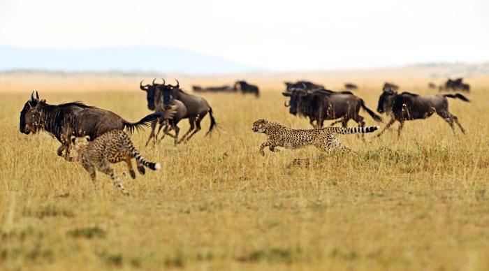 4 Days Masai Mara National Park safari