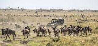 4 Days Masai Mara Wildlife safari