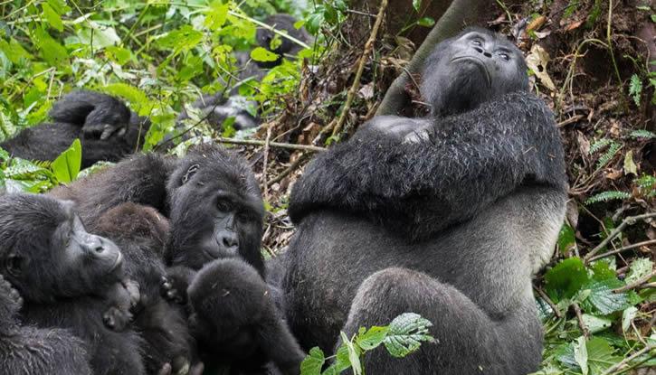 8 days Masai Mara, Serengeti & Virunga Safari
