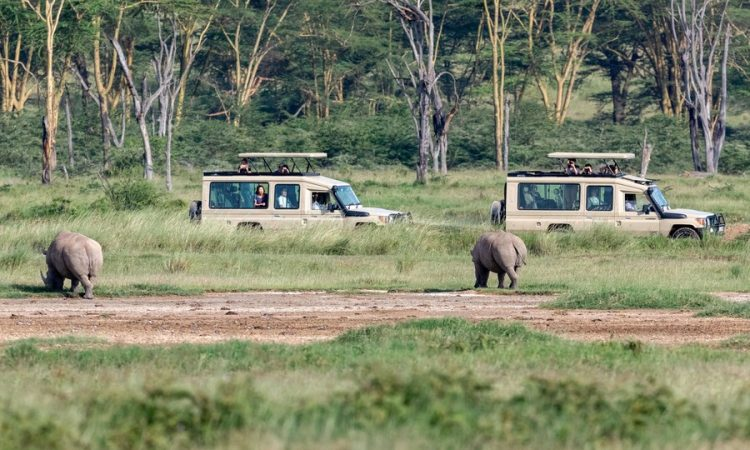 Kenya reduces park entry fees by 50%
