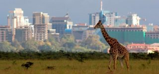 11 Top Rated Tourist Attractions in Nairobi City