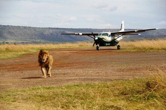 4 Days Masai Mara fly-in safari
