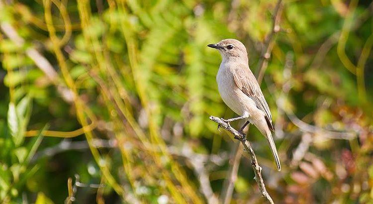 5 Days Kenya Birding Safari
