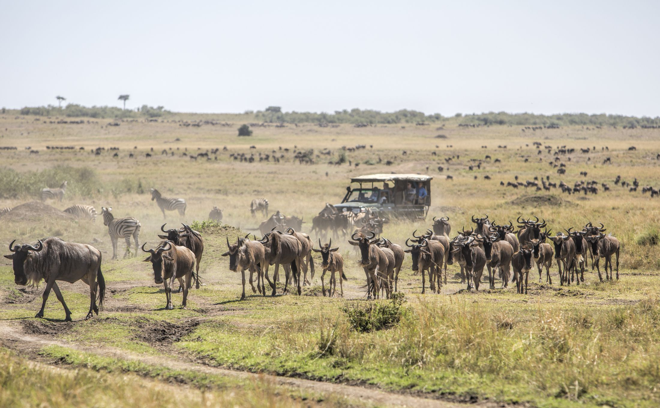 5 Days Masai Mara Wildlife & Volcanoes Gorilla Trekking Safari
