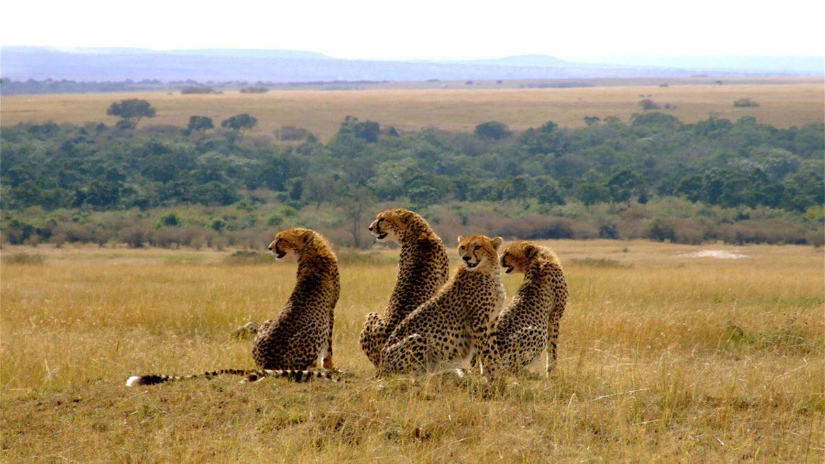4 Days fly-in Masai Mara safari