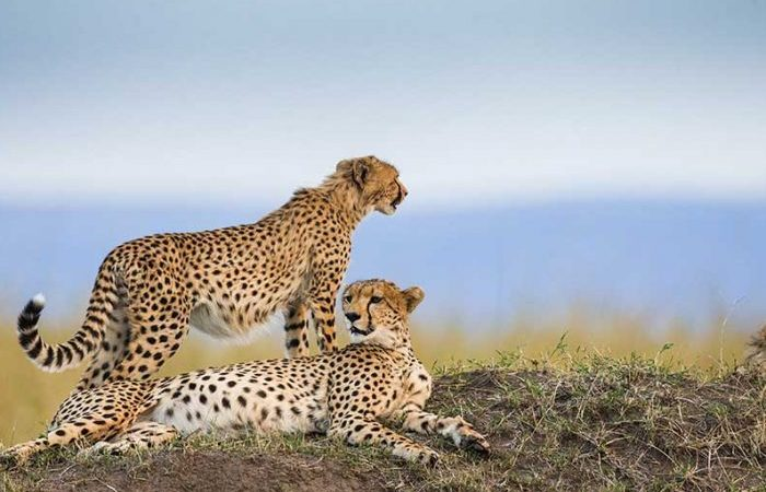 6 Days Kenya & Tanzania Combined Safari